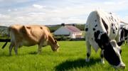 Агропромышленная холдинговая компания вступила в Молочный союз России